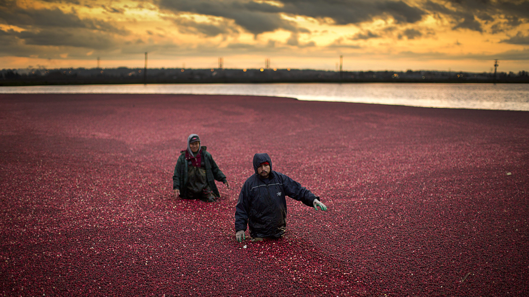 Crucial To Our Food Security Canada Remains Open To Temporary