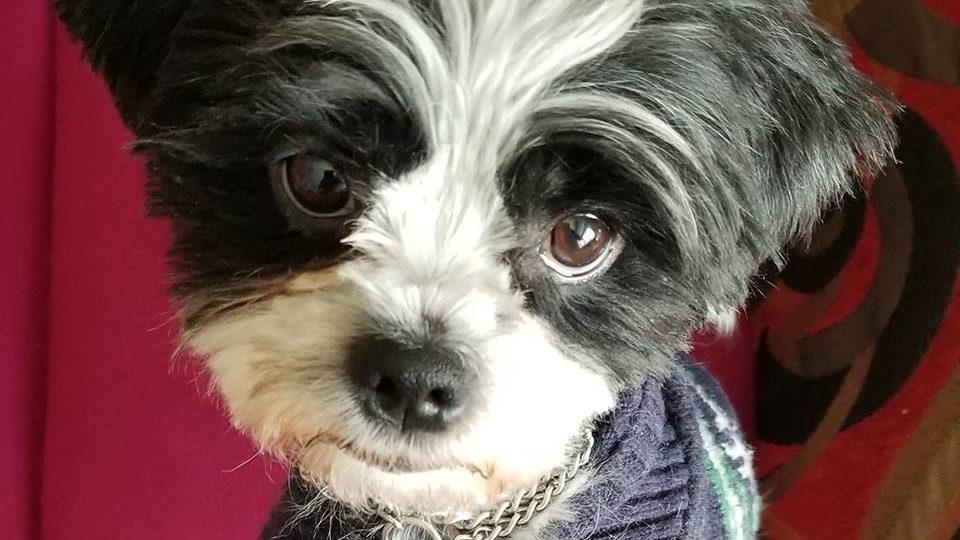 Dog abandoned in Edmonton parking lot finds furever home
